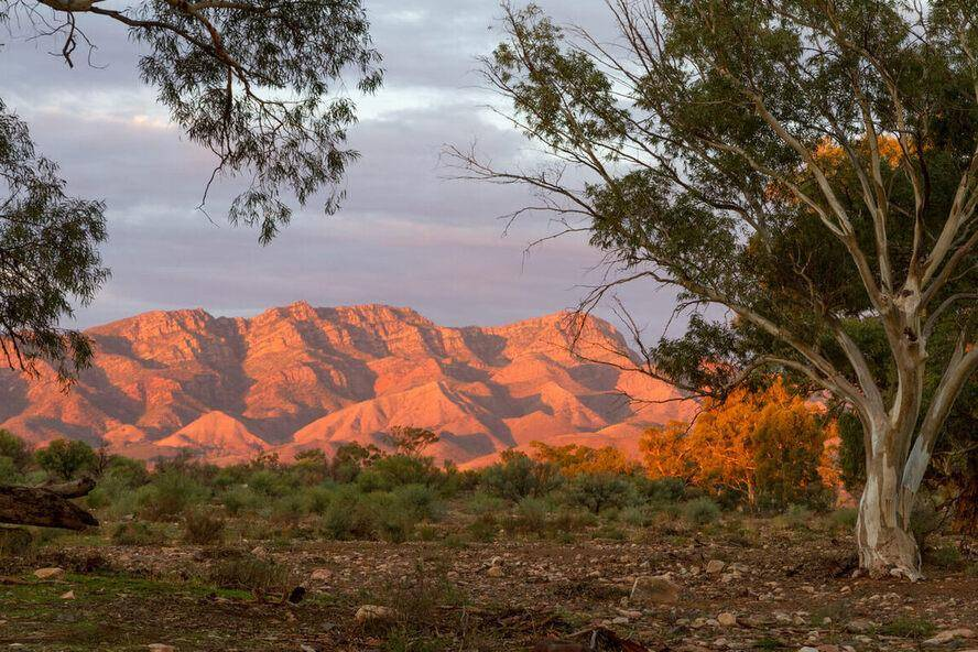 Merna Mora - Flinders Ranges National Park Fels Family