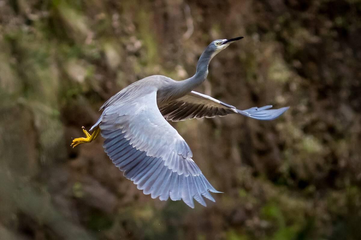 Gordon Country National Park - Bird